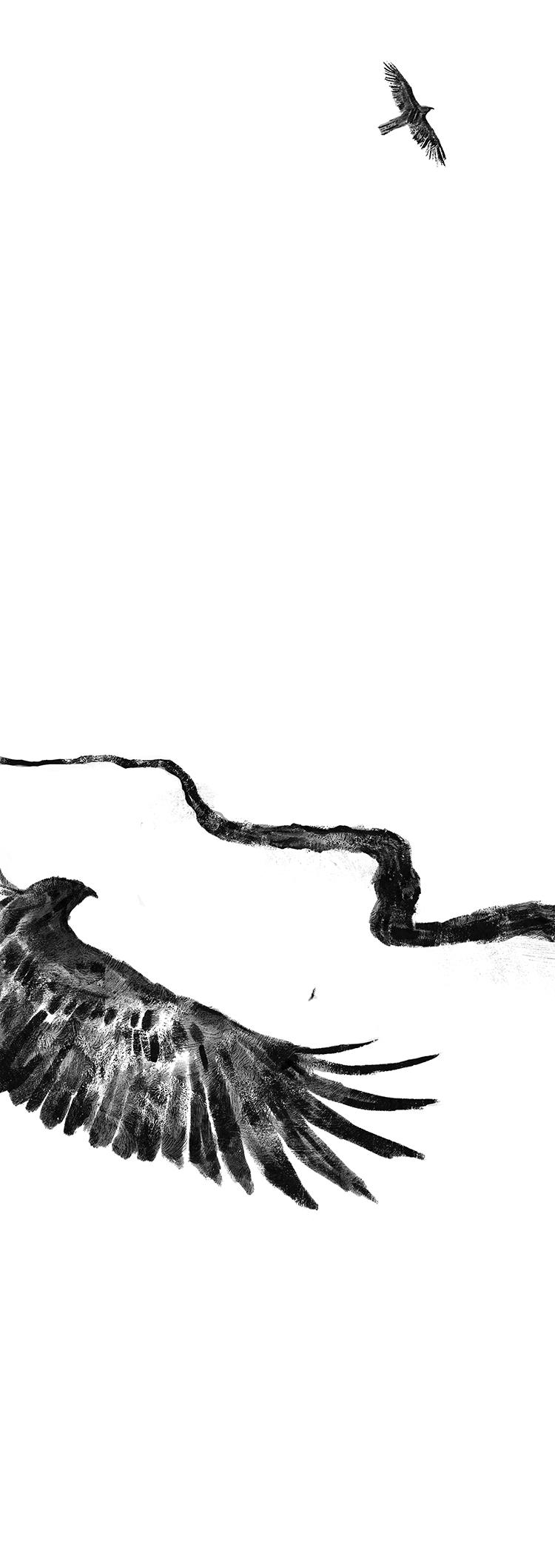 hawk flying above